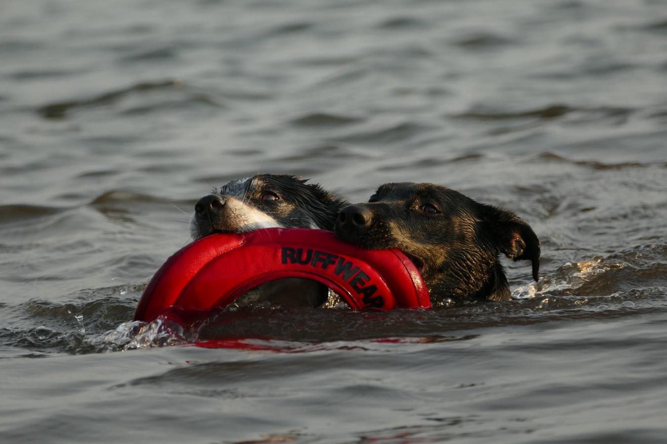Hundeschwimmweste | Rettungsweste für Hunde
