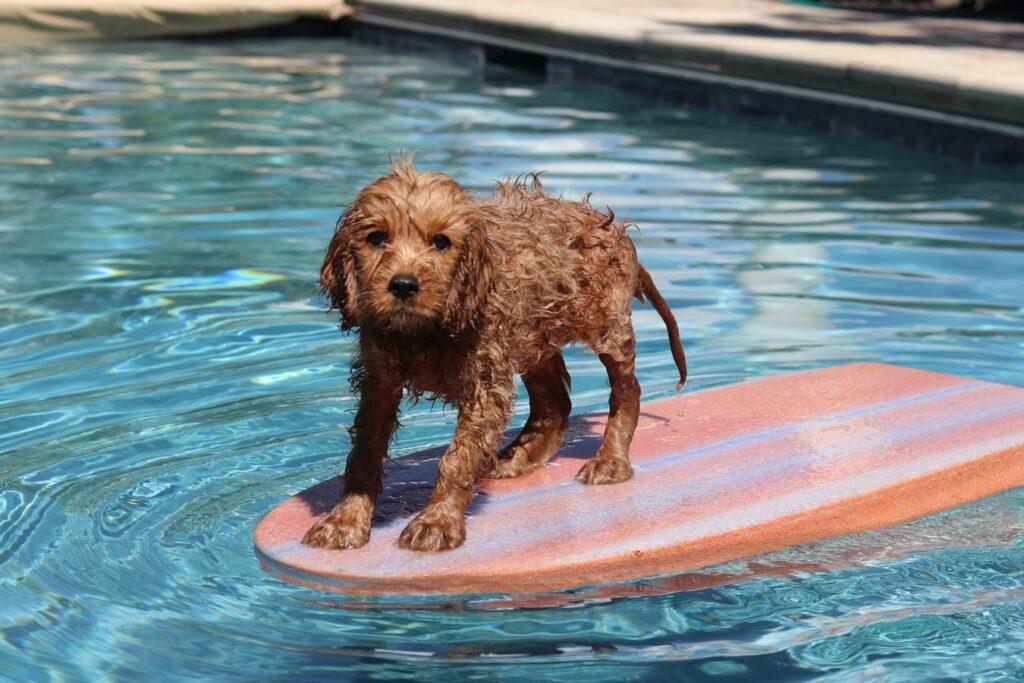 Hundeschwimmweste Segeln, Boot, Wassersport